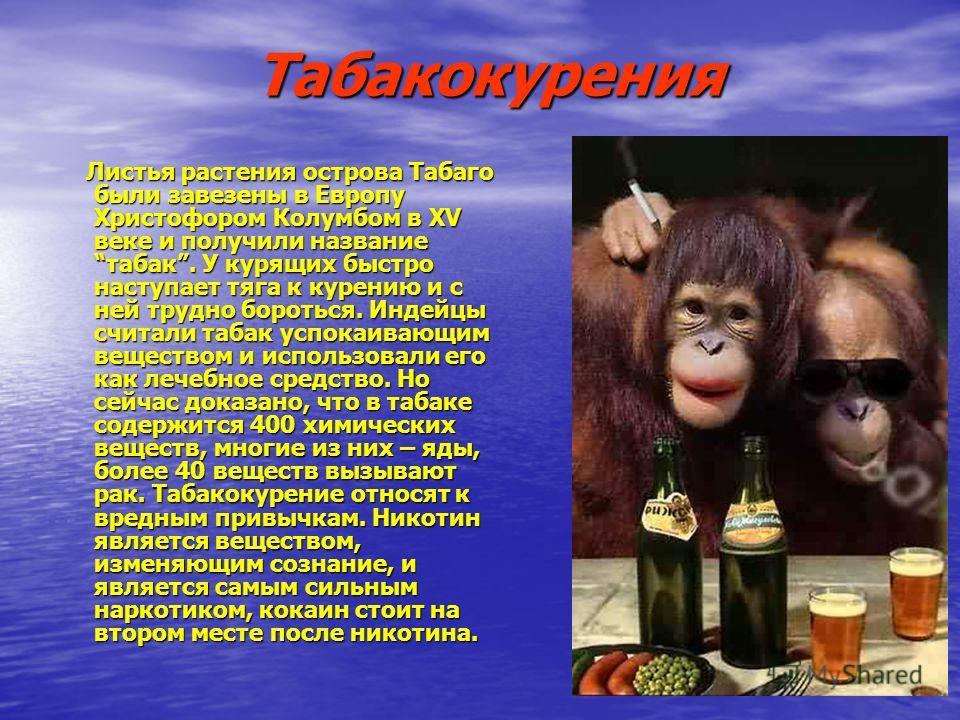 Табакокурения Листья растения острова Табаго были завезены в Европу Христофором Колумбом в XV веке и получили название табак. У курящих быстро наступает тяга к курению и с ней трудно бороться. Индейцы считали табак успокаивающим веществом и использов