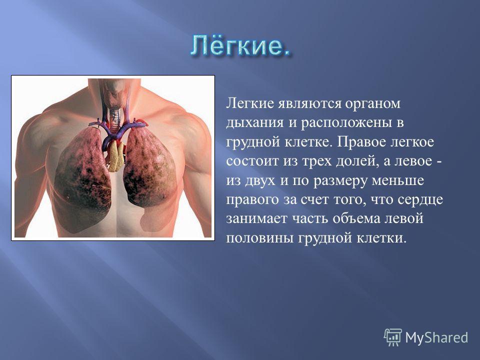 Сердце полый мышечный орган ; имеет овальную или округлую, несколько вытянутую сверху вниз форму. Масса сердца составляет 250-350 граммов. Внешний размер сердца примерно с кулак взрослого человека.