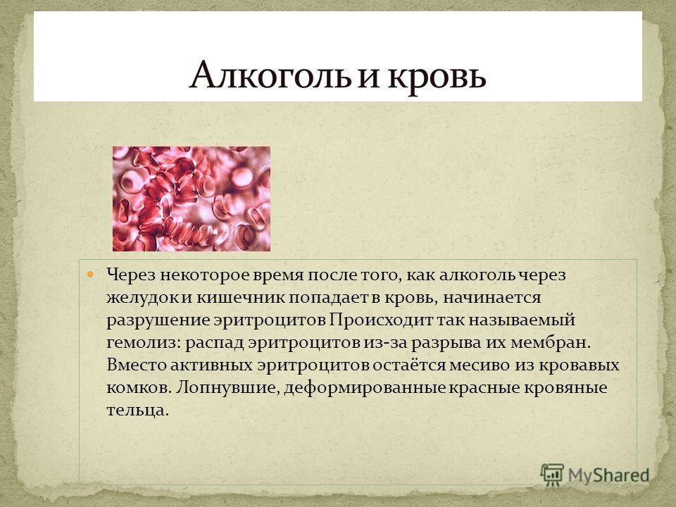 Через некоторое время после того, как алкоголь через желудок и кишечник попадает в кровь, начинается разрушение эритроцитов Происходит так называемый гемолиз: распад эритроцитов из-за разрыва их мембран. Вместо активных эритроцитов остаётся месиво из