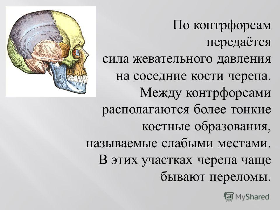 По контрфорсам передаётся сила жевательного давления на соседние кости черепа. Между контрфорсами располагаются более тонкие костные образования, называемые слабыми местами. В этих участках черепа чаще бывают переломы.