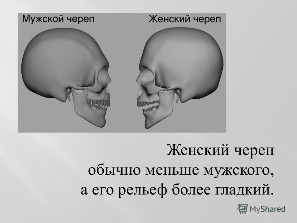 Женский череп обычно меньше мужского, а его рельеф более гладкий.
