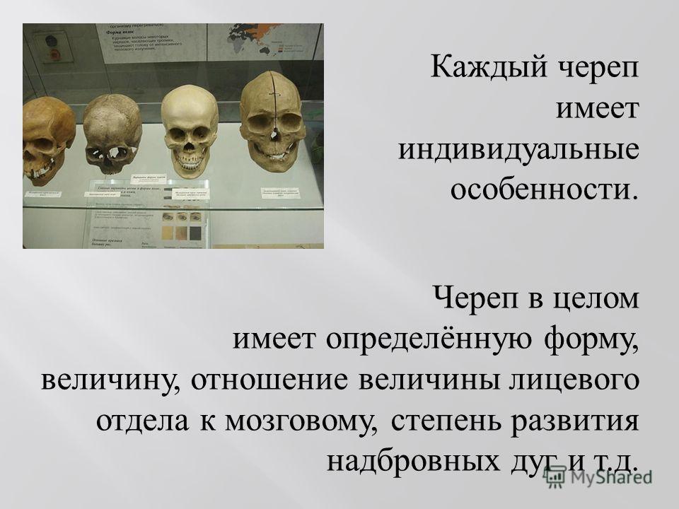 Каждый череп имеет индивидуальные особенности. Череп в целом имеет определённую форму, величину, отношение величины лицевого отдела к мозговому, степень развития надбровных дуг и т. д.