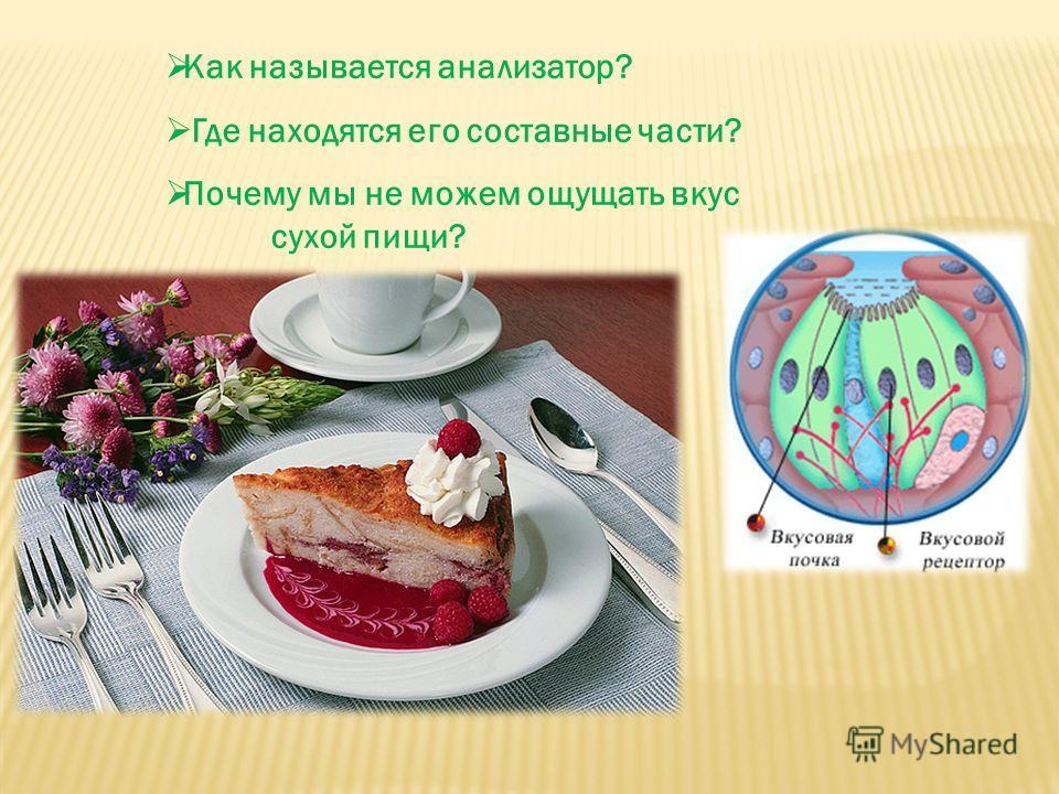Как называется анализатор? Где находятся его составные части? Почему мы не можем ощущать вкус сухой пищи?