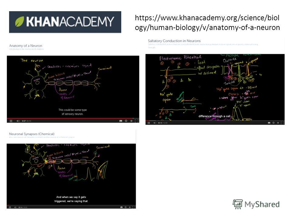 https://www.khanacademy.org/science/biol ogy/human-biology/v/anatomy-of-a-neuron