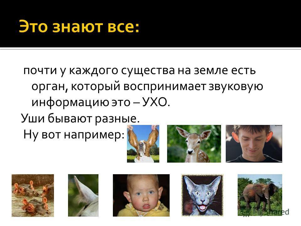 почти у каждого существа на земле есть орган, который воспринимает звуковую информацию это – УХО. Уши бывают разные. Ну вот например: