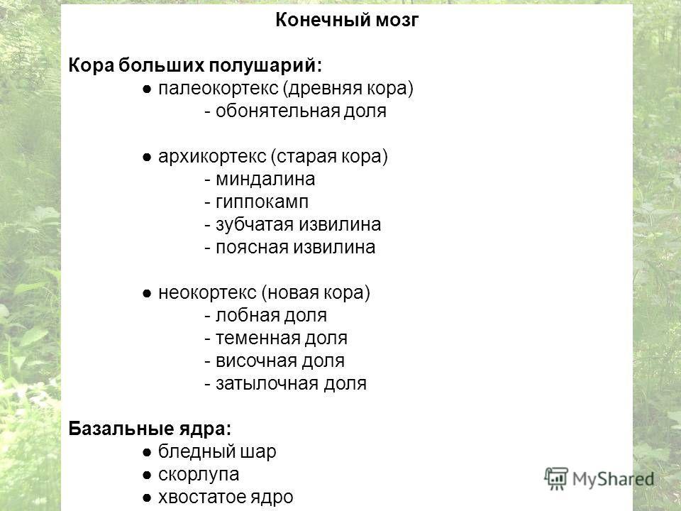 Конечный мозг Кора больших полушарий: палеокортекс (древняя кора) - обонятельная доля архикортекс (старая кора) - миндалина - гиппокамп - зубчатая извилина - поясная извилина неокортекс (новая кора) - лобная доля - теменная доля - височная доля - зат