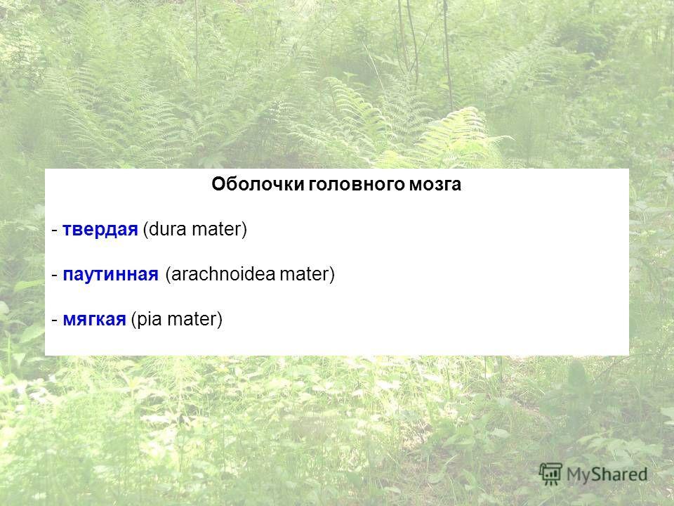 Оболочки головного мозга - твердая (dura mater) - паутинная (arachnoidea mater) - мягкая (pia mater)