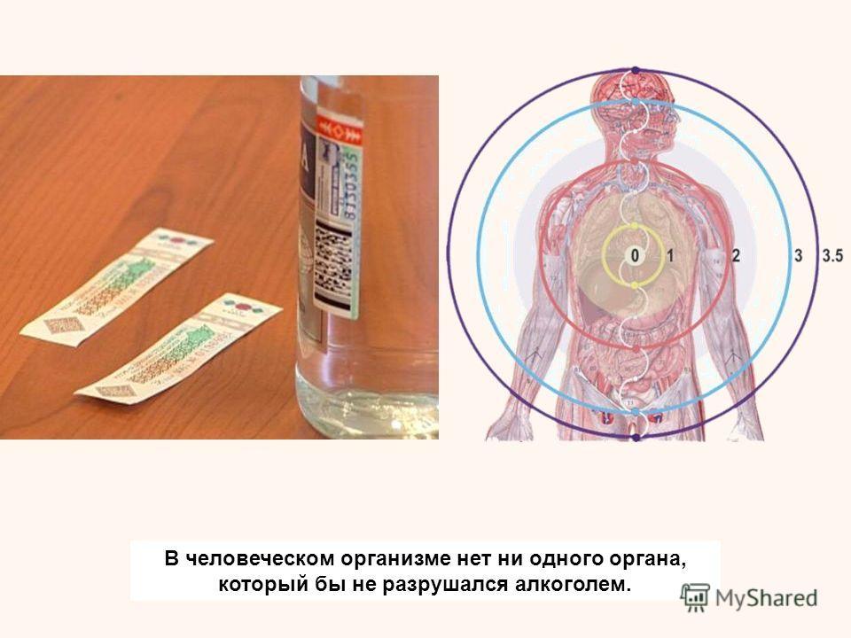 В человеческом организме нет ни одного органа, который бы не разрушался алкоголем.