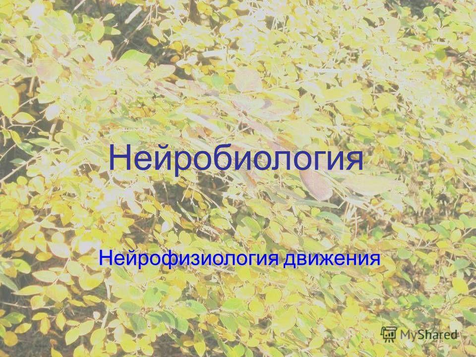 Нейробиология Нейрофизиология движения