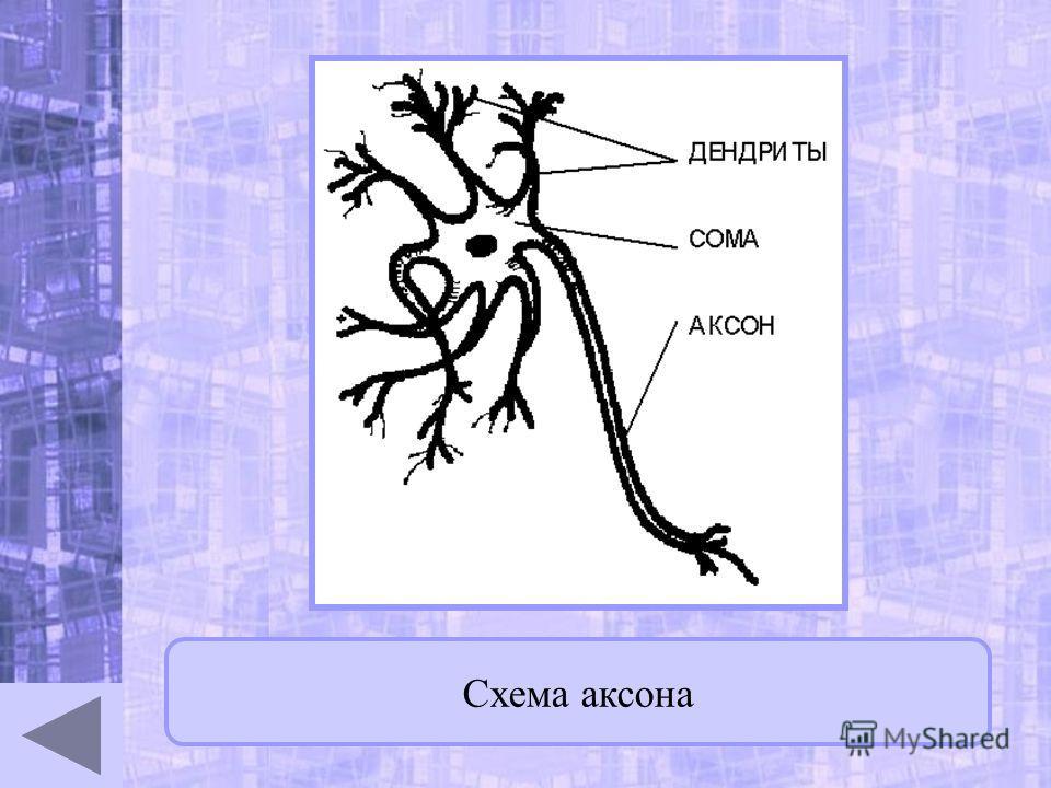 Схема аксона