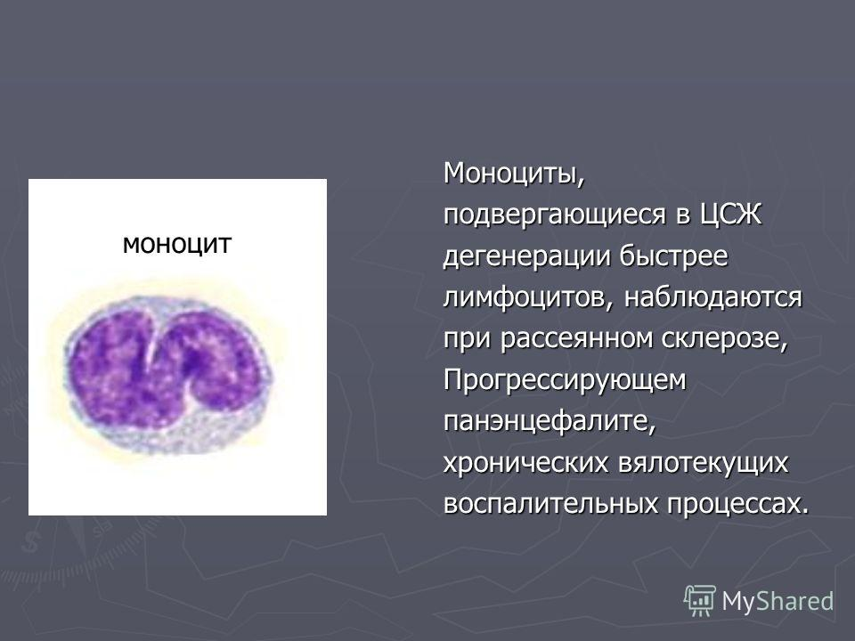 Моноциты, подвергающиеся в ЦСЖ дегенерации быстрее лимфоцитов, наблюдаются при рассеянном склерозе, Прогрессирующемпанэнцефалите, хронических вялотекущих воспалительных процессах. моноцит