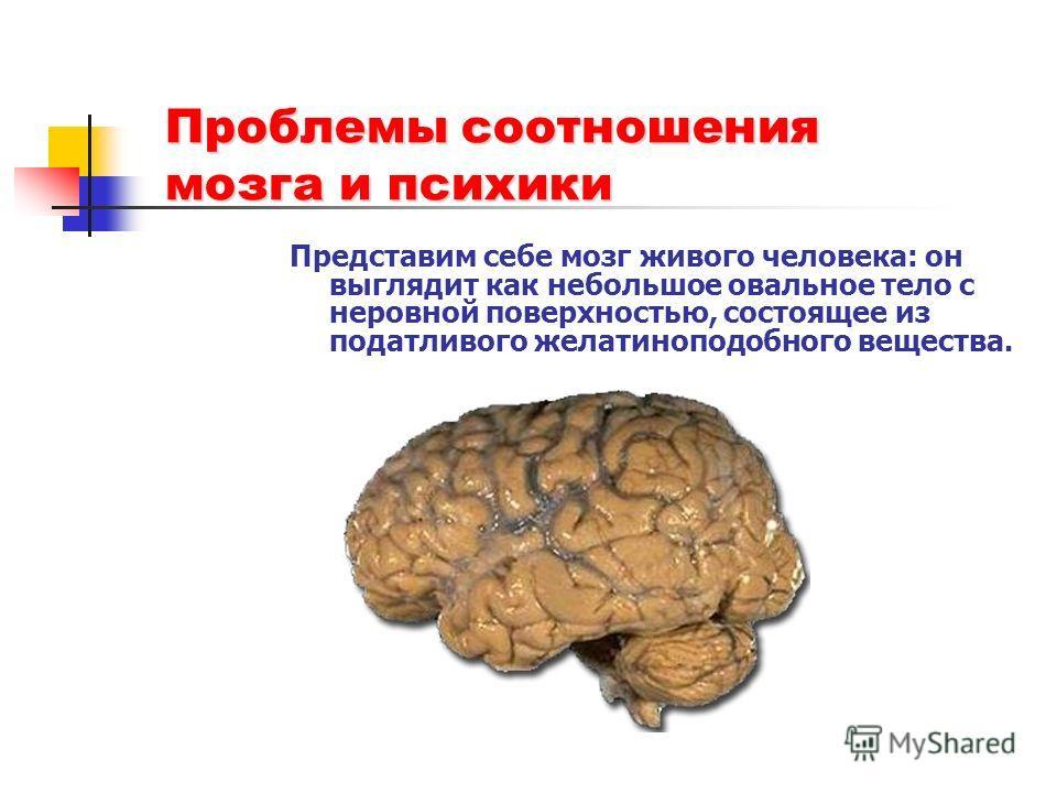 Проблемы соотношения мозга и психики Представим себе мозг живого человека: он выглядит как небольшое овальное тело с неровной поверхностью, состоящее из податливого желатиноподобного вещества.