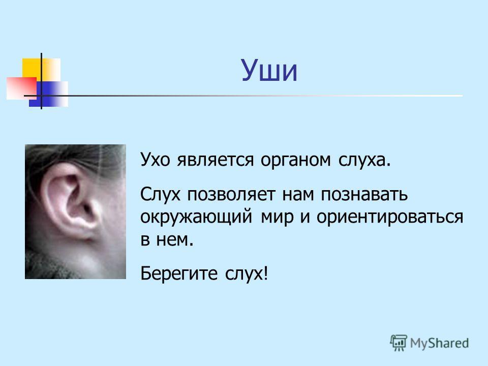 Уши Ухо является органом слуха. Слух позволяет нам познавать окружающий мир и ориентироваться в нем. Берегите слух!