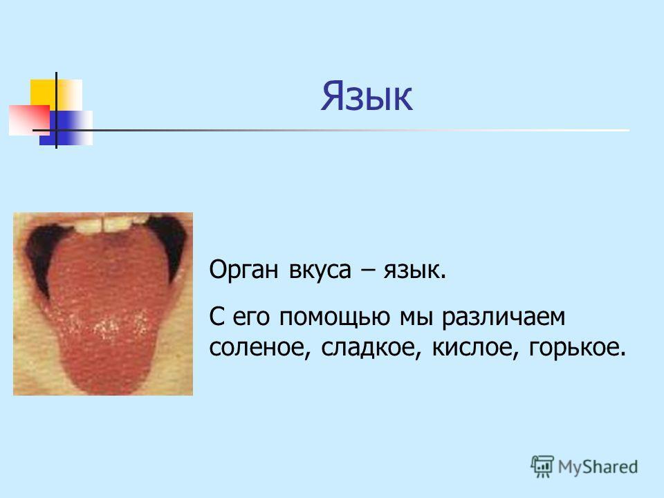Язык Орган вкуса – язык. С его помощью мы различаем соленое, сладкое, кислое, горькое.