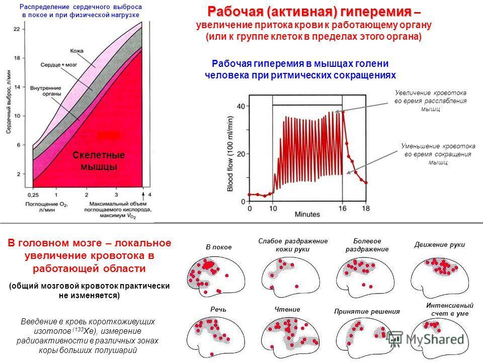 Рабочая (активная) гиперемия Рабочая (активная) гиперемия – увеличение притока крови к работающему органу (или к группе клеток в пределах этого органа) В головном мозге – локальное увеличение кровотока в работающей области (общий мозговой кровоток пр