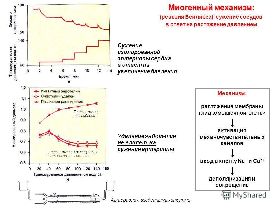 Сужение изолированной артериолы сердца в ответ на увеличение давления Удаление эндотелия не влияет на сужение артериолы Миогенный механизм: Миогенный механизм: (реакция Бейлисса): cужение сосудов в ответ на растяжение давлением Механизм: растяжение м