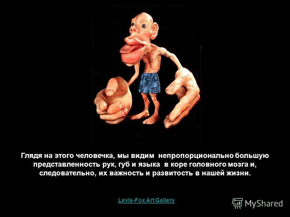Levis-Fox Art Gallery Глядя на этого человечка, мы видим непропорционально большую представленность рук, губ и языка в коре головного мозга и, следовательно, их важность и развитость в нашей жизни.