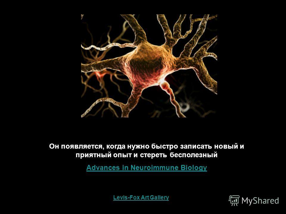 Он появляется, когда нужно быстро записать новый и приятный опыт и стереть бесполезный Advances in Neuroimmune Biology Levis-Fox Art Gallery