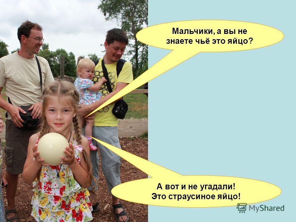 Мальчики, а вы не знаете чьё это яйцо? А вот и не угадали! Это страусиное яйцо!