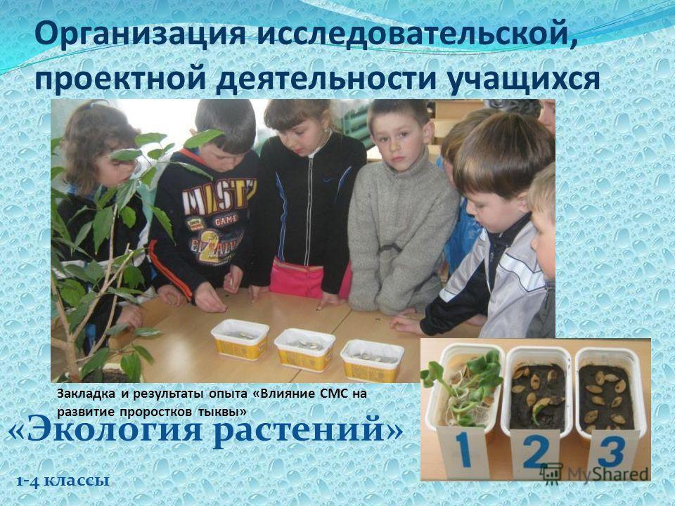 Организация исследовательской, проектной деятельности учащихся «Экология растений» 1-4 классы Закладка и результаты опыта «Влияние СМС на развитие проростков тыквы»