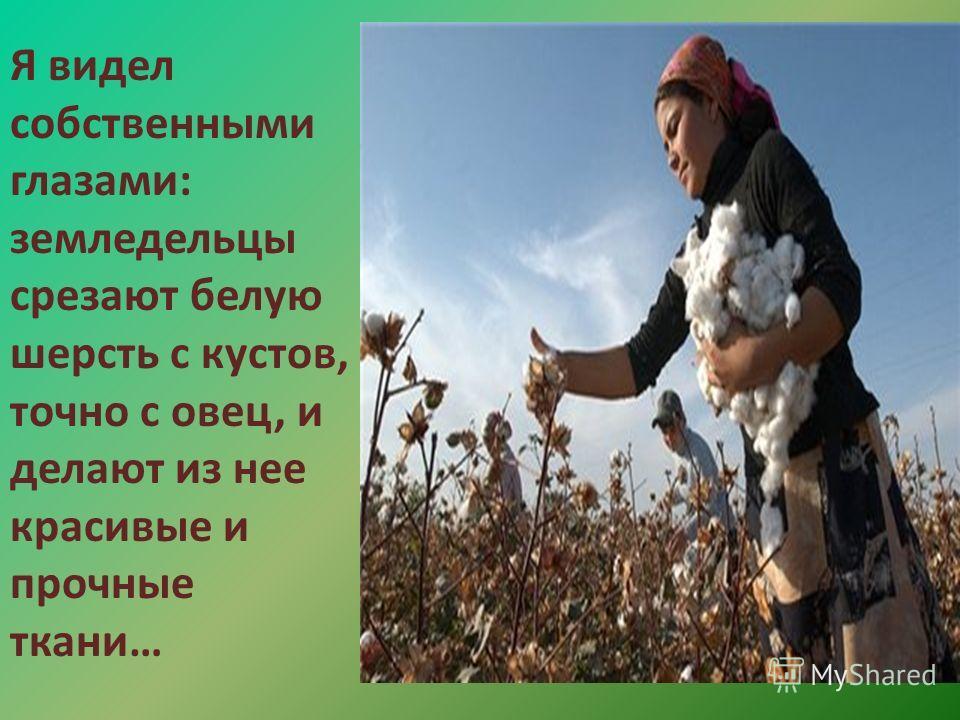 Я видел собственными глазами: земледельцы срезают белую шерсть с кустов, точно с овец, и делают из нее красивые и прочные ткани…