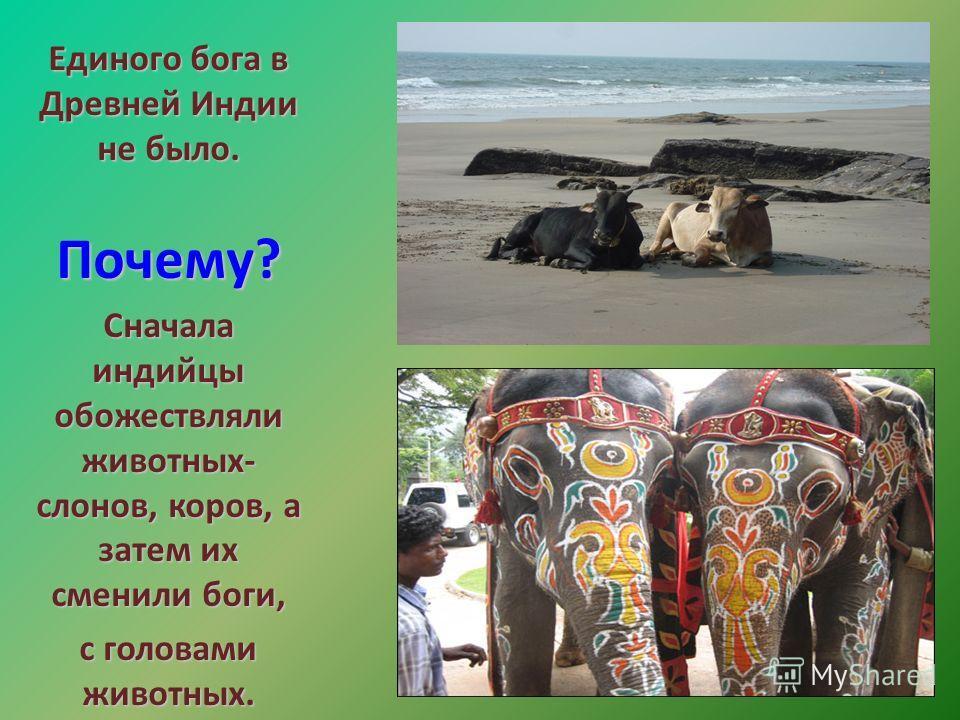 Единого бога в Древней Индии не было. Почему? Почему? Сначала индийцы обожествляли животных- слонов, коров, а затем их сменили боги, с головами животных.