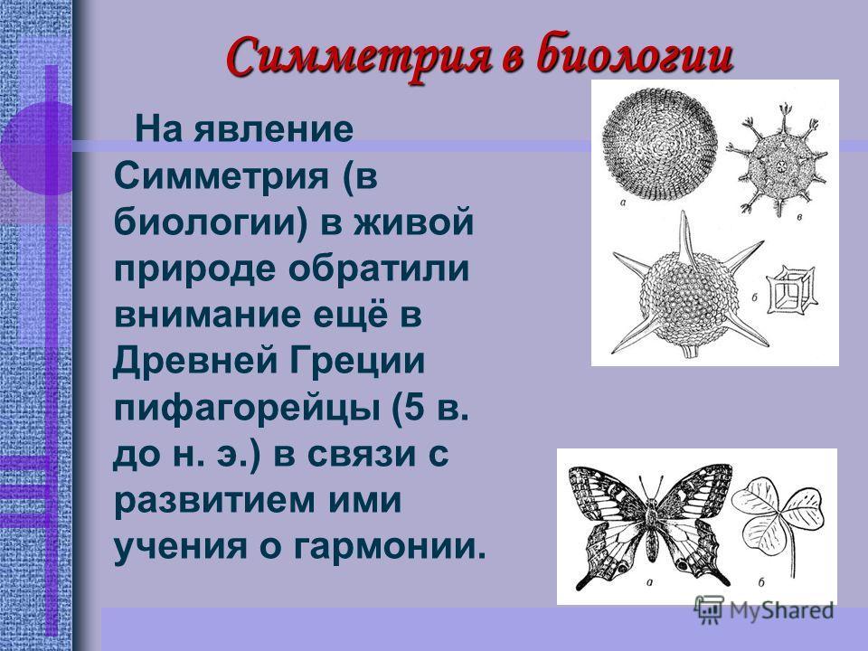 Симметрия в биологии На явление Симметрия (в биологии) в живой природе обратили внимание ещё в Древней Греции пифагорейцы (5 в. до н. э.) в связи с развитием ими учения о гармонии.
