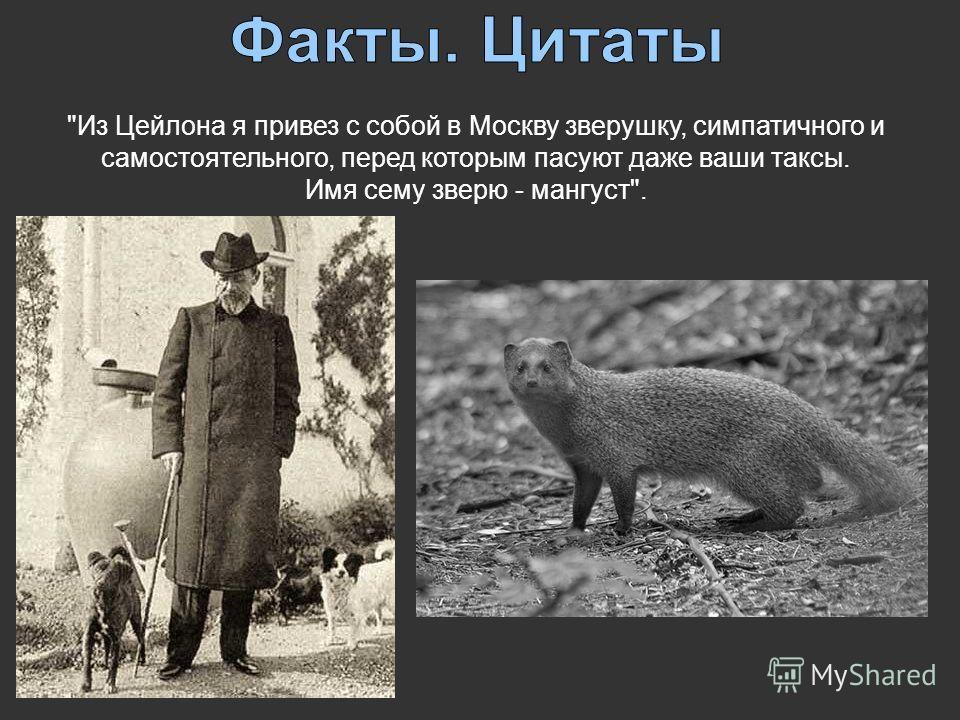 Из Цейлона я привез с собой в Москву зверушку, симпатичного и самостоятельного, перед которым пасуют даже ваши таксы. Имя сему зверю - мангуст.
