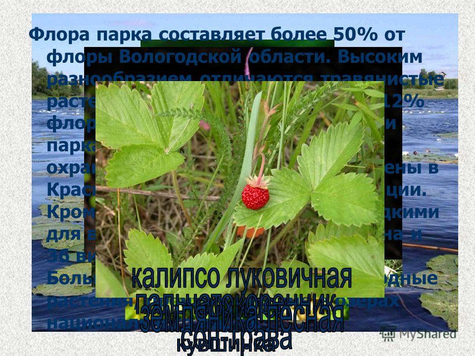 Флора парка составляет более 50% от флоры Вологодской области. Высоким разнообразием отличаются травянистые растения. Из них около 60 видов (12% флоры), отмеченных на территории парка, являются редкими и охраняемыми. Восемь видов занесены в Красную к