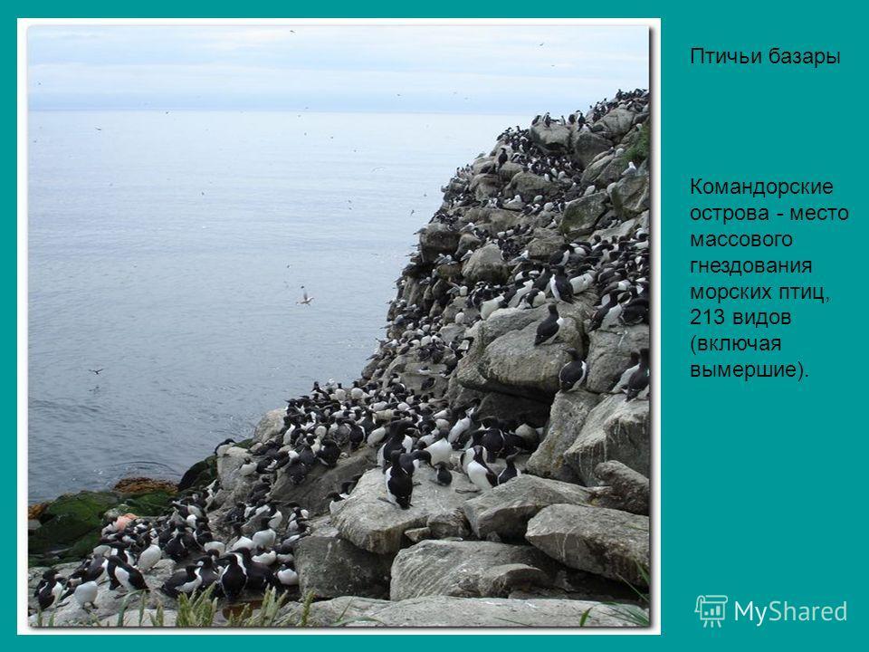 Птичьи базары Командорские острова - место массового гнездования морских птиц, 213 видов (включая вымершие).