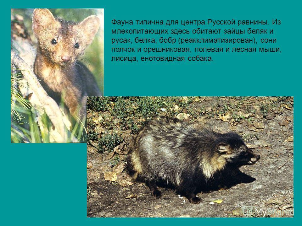 Фауна типична для центра Русской равнины. Из млекопитающих здесь обитают зайцы беляк и русак, белка, бобр (реакклиматизирован), сони полчок и орешниковая, полевая и лесная мыши, лисица, енотовидная собака.