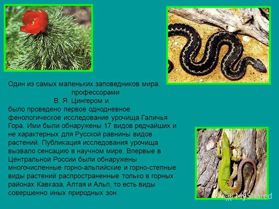 Один из самых маленьких заповедников мира. 15 июня 1882 году профессорами Московского университета В. Я. Цингером и Д. И. Литвиновым было проведено первое однодневное фенологическое исследование урочища Галичья Гора. Ими были обнаружены 17 видов редч