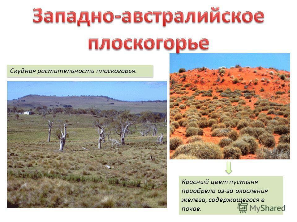 Скудная растительность плоскогорья. Красный цвет пустыня приобрела из-за окисления железа, содержащегося в почве.