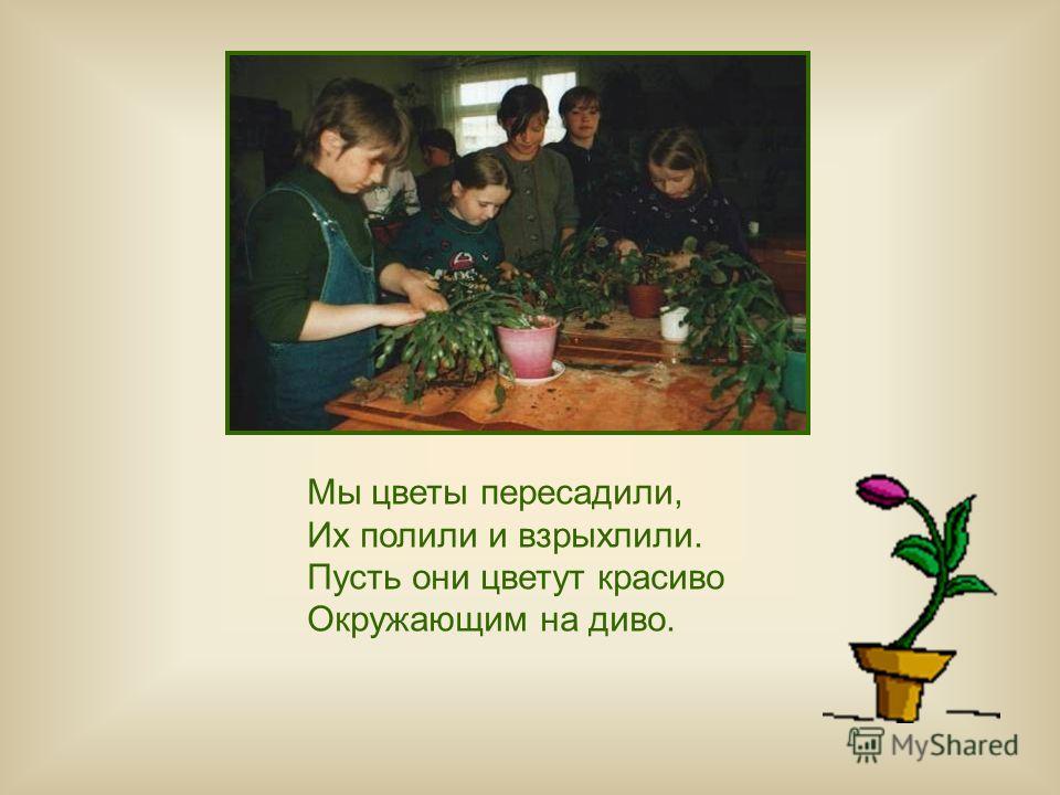 Мы цветы пересадили, Их полили и взрыхлили. Пусть они цветут красиво Окружающим на диво.
