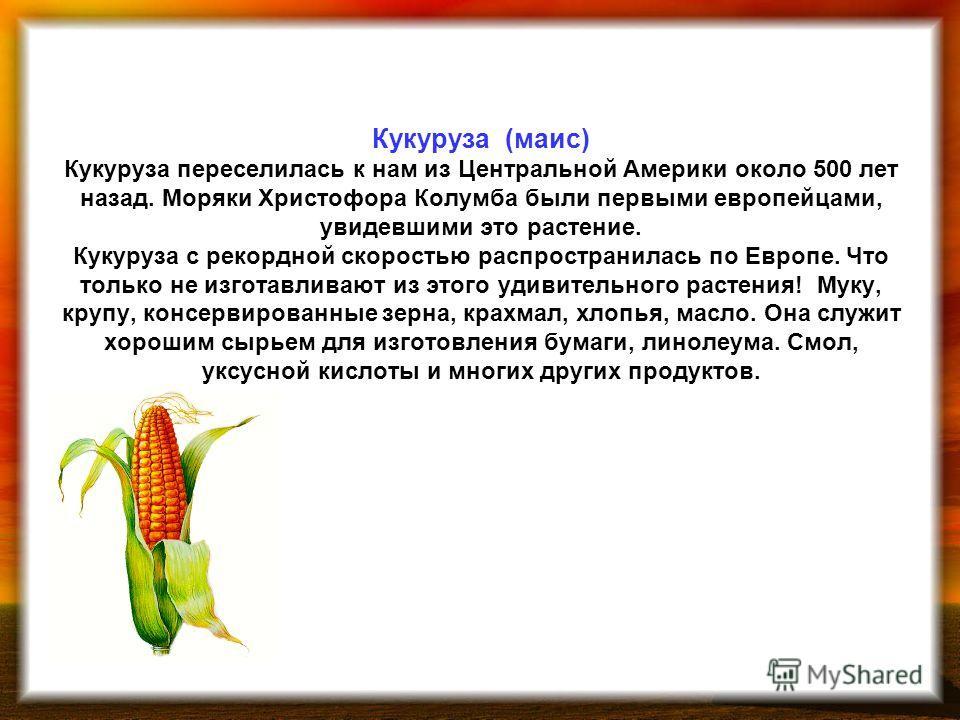 Кукуруза (маис) Кукуруза переселилась к нам из Центральной Америки около 500 лет назад. Моряки Христофора Колумба были первыми европейцами, увидевшими это растение. Кукуруза с рекордной скоростью распространилась по Европе. Что только не изготавливаю