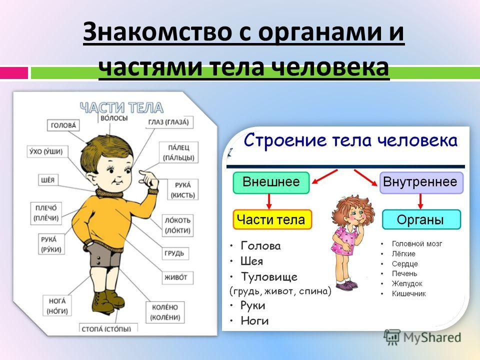 Знакомство с органами и частями тела человека