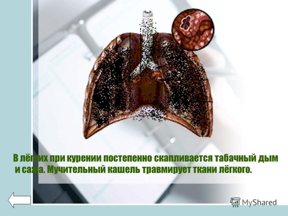 В лёгких при курении постепенно скапливается табачный дым и сажа. Мучительный кашель травмирует ткани лёгкого.