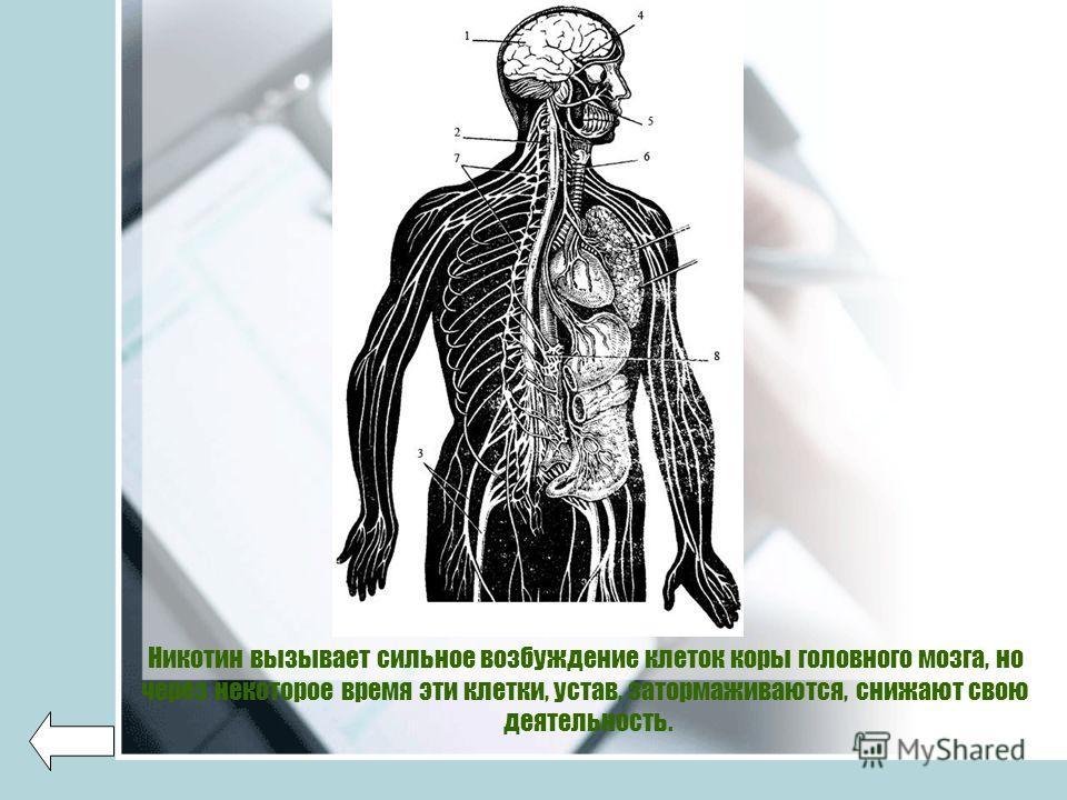 Никотин вызывает сильное возбуждение клеток коры головного мозга, но через некоторое время эти клетки, устав, затормаживаются, снижают свою деятельность.