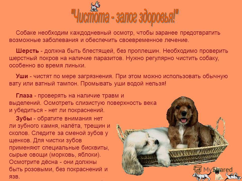 Собаке необходим каждодневный осмотр, чтобы заранее предотвратить возможные заболевания и обеспечить своевременное лечение. Шерсть - должна быть блестящей, без проплешин. Необходимо проверить шерстный покров на наличие паразитов. Нужно регулярно чист