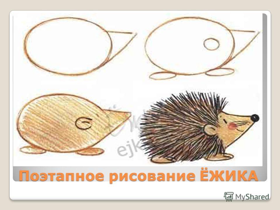 Поэтапное рисование ЁЖИКА