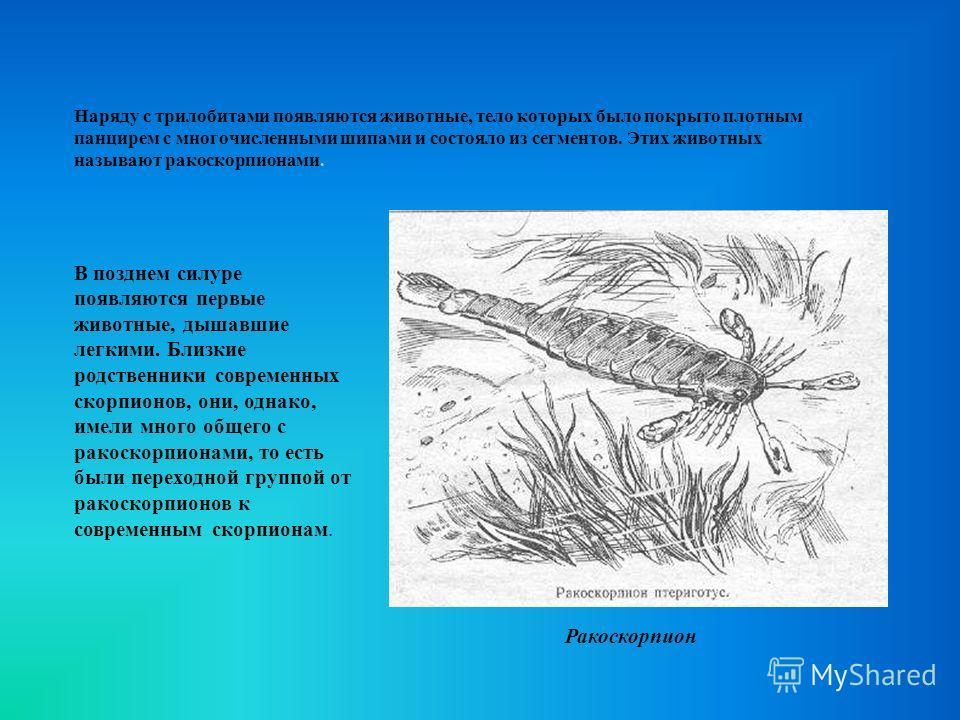 Наряду с трилобитами появляются животные, тело которых было покрыто плотным панцирем с многочисленными шипами и состояло из сегментов. Этих животных называют ракоскорпионами. В позднем силуре появляются первые животные, дышавшие легкими. Близкие родс