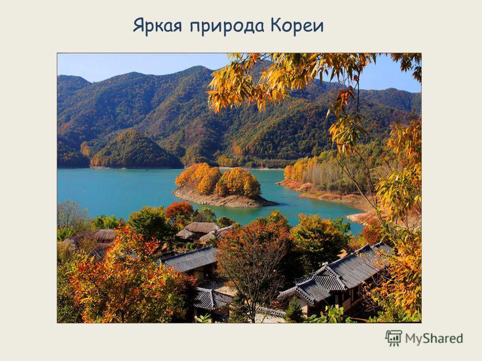 Яркая природа Кореи