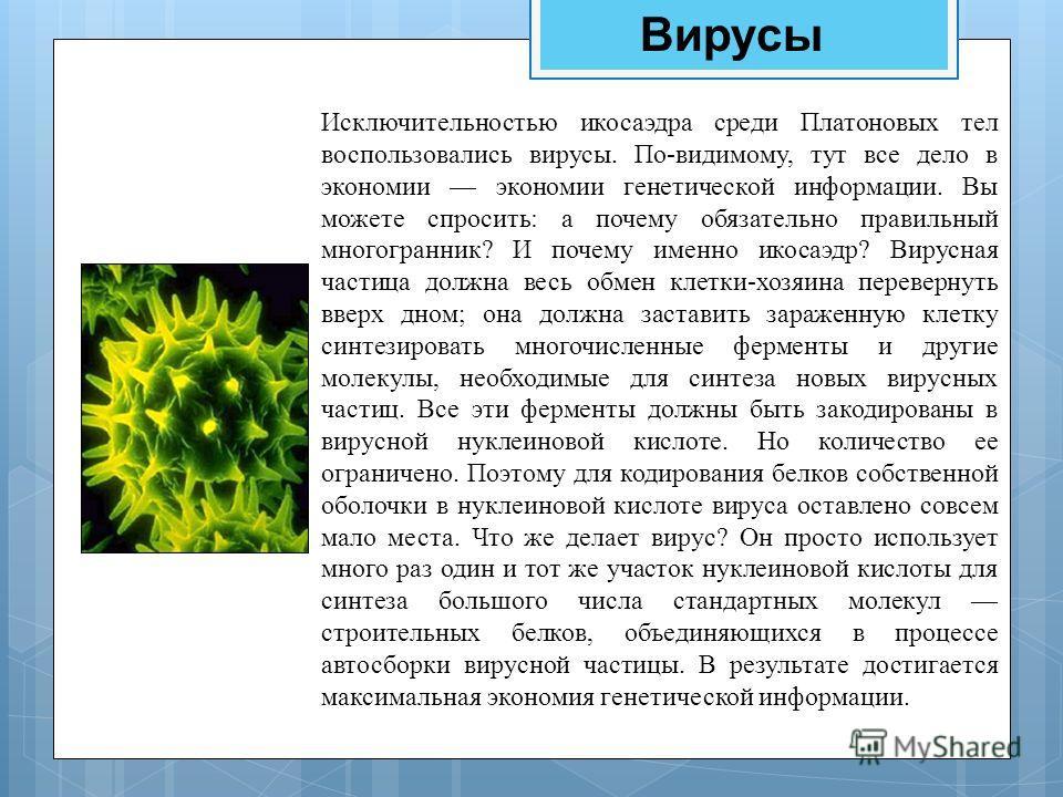 Вирусы Исключительностью икосаэдра среди Платоновых тел воспользовались вирусы. По-видимому, тут все дело в экономии экономии генетической информации. Вы можете спросить: а почему обязательно правильный многогранник? И почему именно икосаэдр? Вирусна
