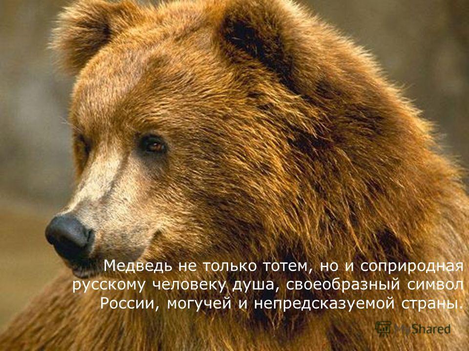 Медведь не только тотем, но и соприродная русскому человеку душа, своеобразный символ России, могучей и непредсказуемой страны.