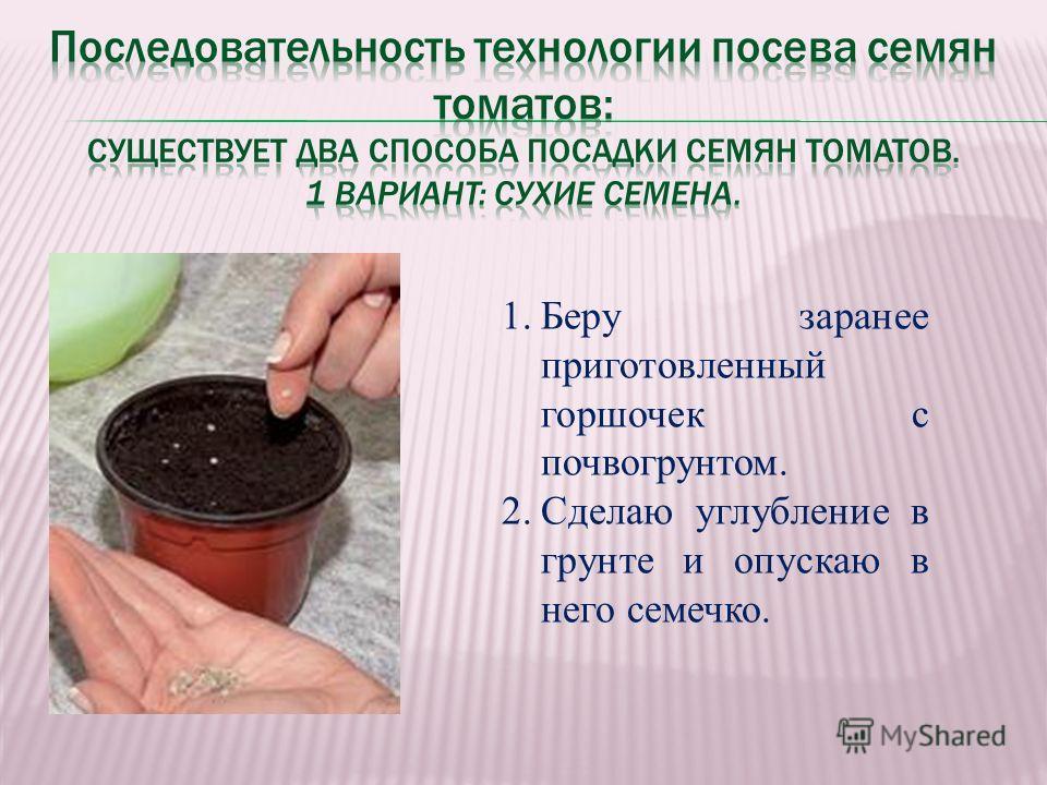 1.Беру заранее приготовленный горшочек с почвогрунтом. 2.Сделаю углубление в грунте и опускаю в него семечко.