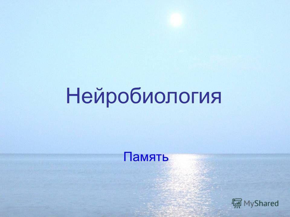 Энграмма фото