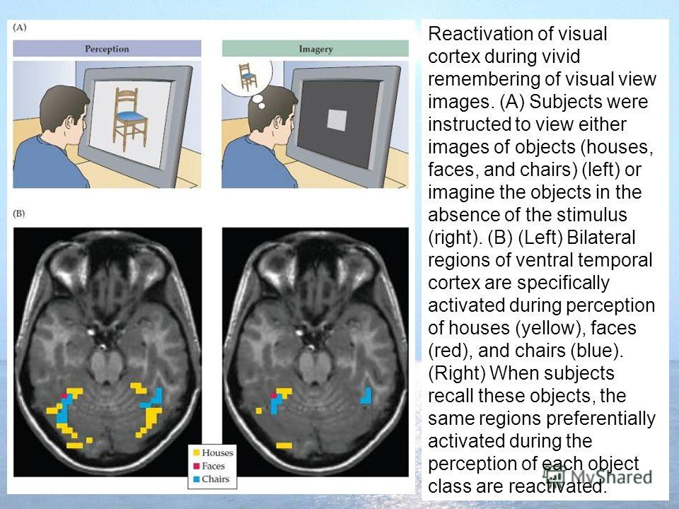 Reactivation of visual cortex during vivid remembering of visual view images. (A) Subjects were instructed to view either images of objects (houses, faces, and chairs) (left) or imagine the objects in the absence of the stimulus (right). (B) (Left) B