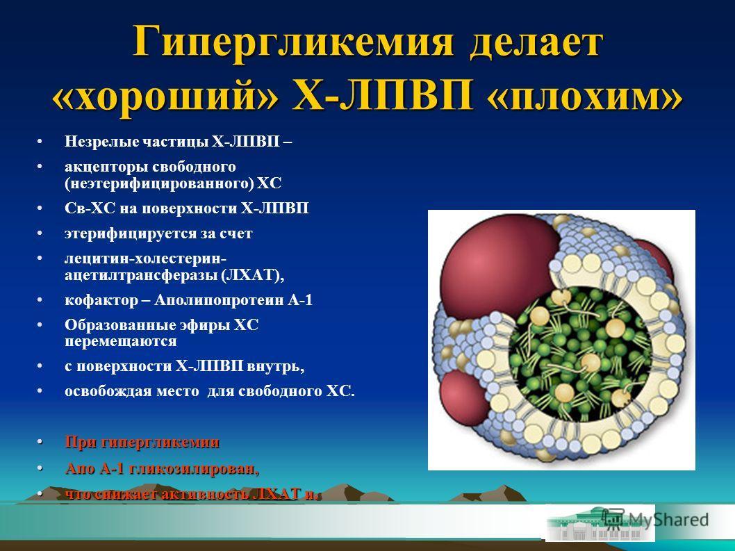 Гипергликемия делает «хороший» Х-ЛПВП «плохим» Незрелые частицы Х-ЛПВП – акцепторы свободного (неэтерифицированного) ХС Св-ХС на поверхности Х-ЛПВП этерифицируется за счет лецитин-холестерин- ацетилтрансферазы (ЛХАТ), кофактор – Аполипопротеин А-1 Об