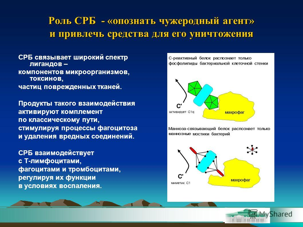 Роль СРБ - «опознать чужеродный агент» и привлечь средства для его уничтожения СРБ связывает широкий спектр лигандов – компонентов микроорганизмов, токсинов, частиц поврежденных тканей. Продукты такого взаимодействия активируют комплемент по классиче