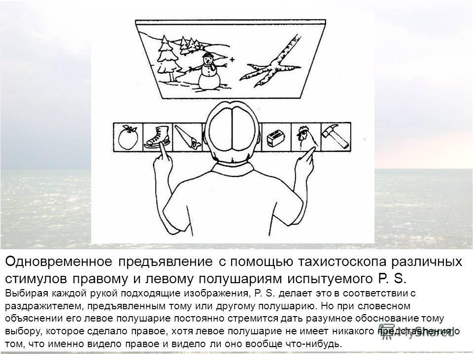 Одновременное предъявление с помощью тахистоскопа различных стимулов правому и левому полушариям испытуемого P. S. Выбирая каждой рукой подходящие изображения, P. S. делает это в соответствии с раздражителем, предъявленным тому или другому полушарию.